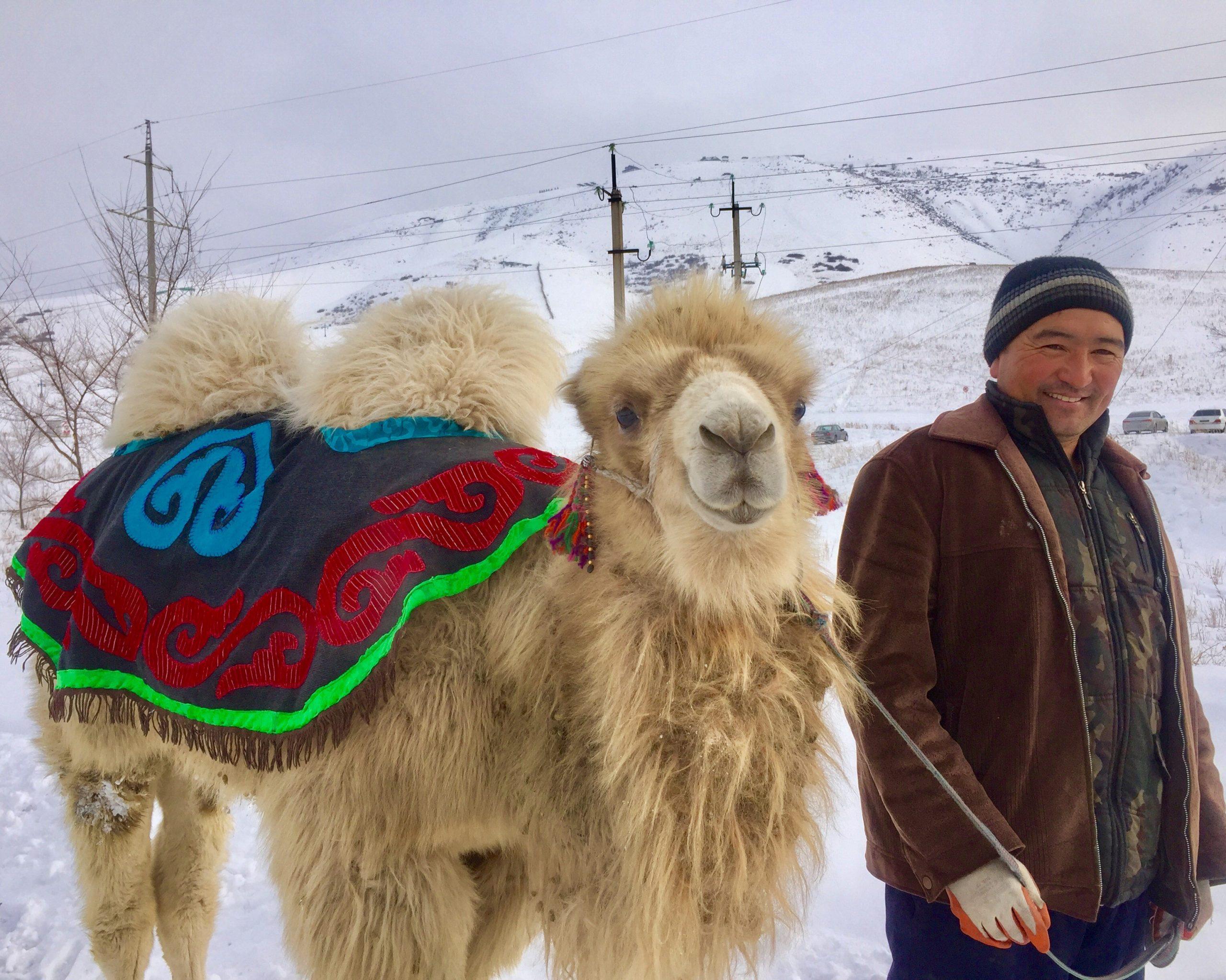 Kazachstan Kameel
