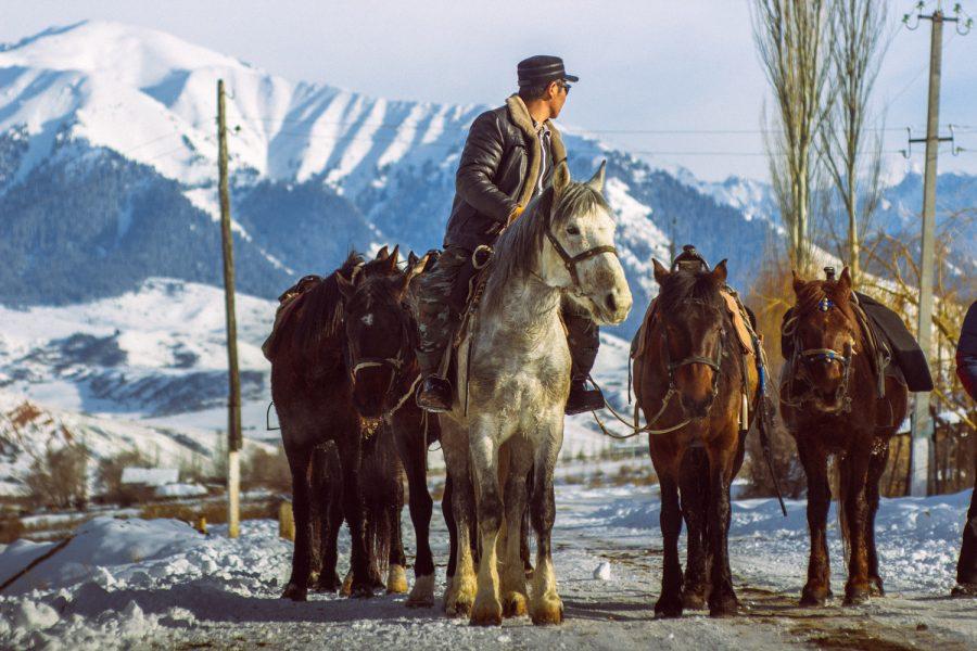 Lokale paardengids in Kirgizië