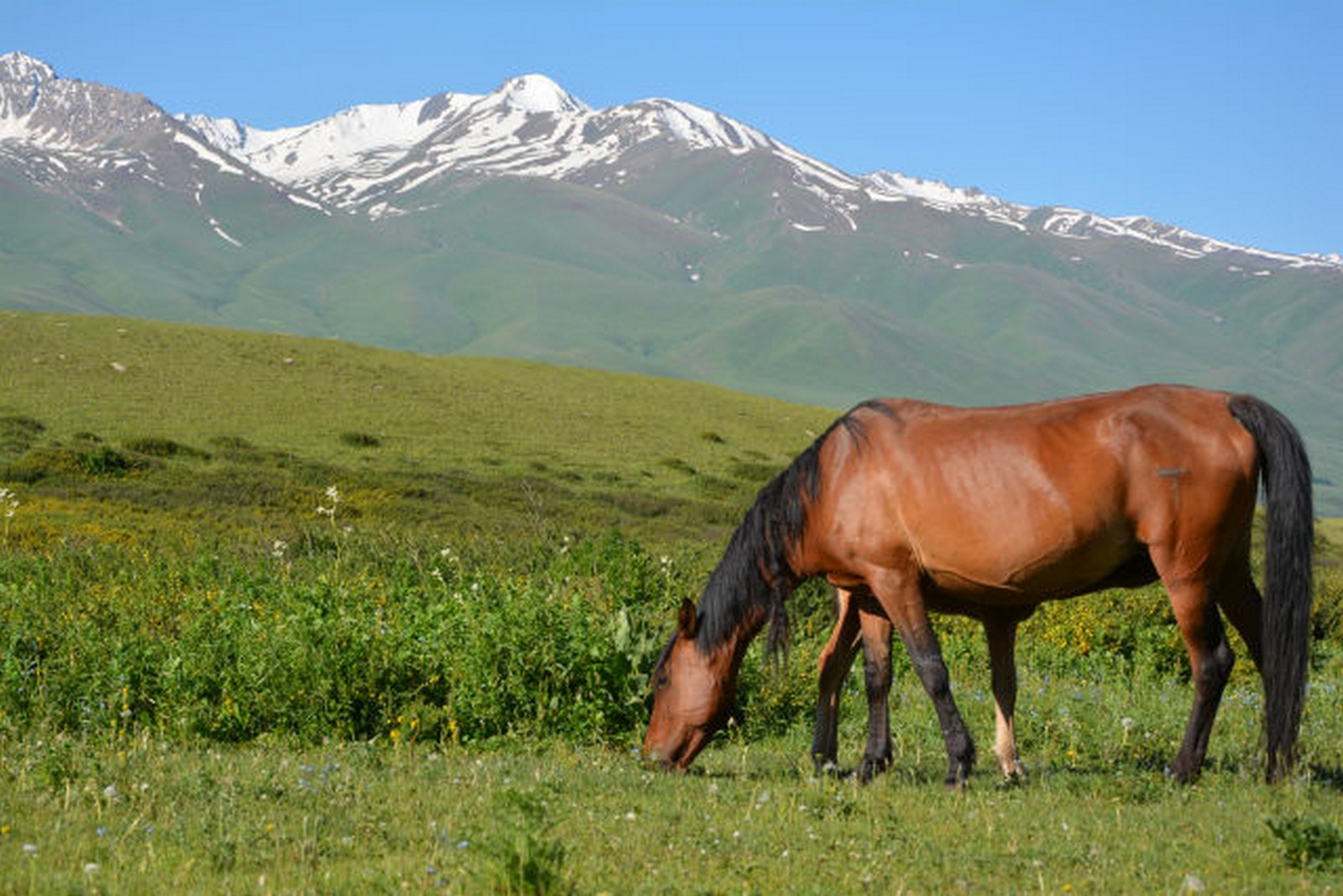 Jyrgalan paard